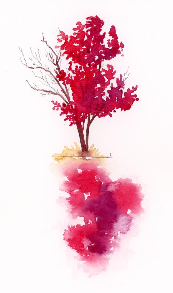 maple trees watercolour study sketch autumn Ontario canada